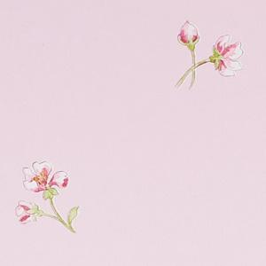 Blossom Hill Pink